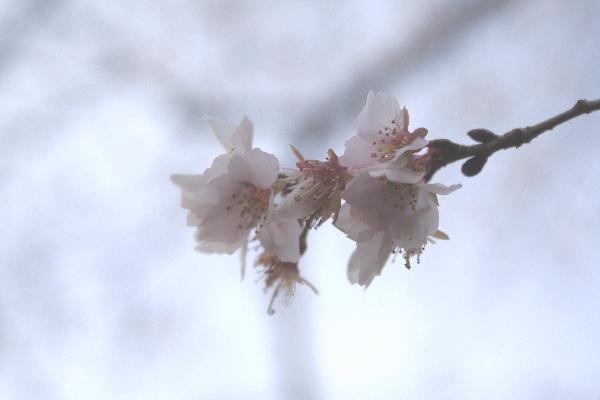 keyaki-001351s.jpg