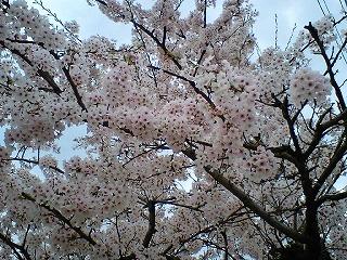 2008_0413_03.jpg