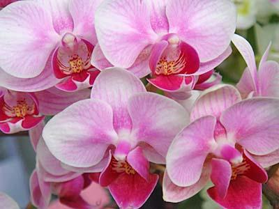 産業祭の花