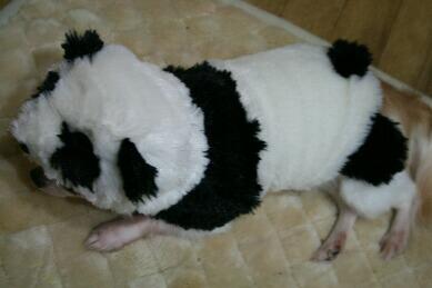 panda 006