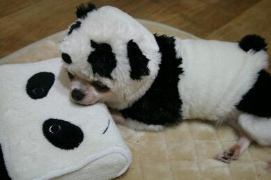 panda 011