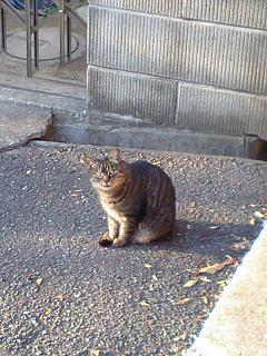 20080106養父家前の猫s
