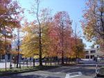 チューリップ公園1