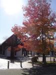 チューリップ公園2