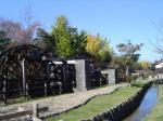 チューリップ公園5