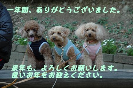 DSC_0621-yoitosi.jpg