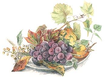 葡萄イラスト