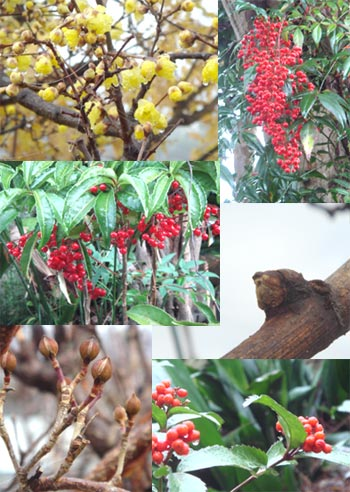 061227_garden.jpg