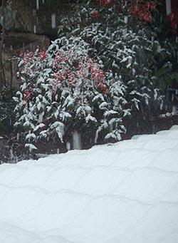 0701_snow.jpg