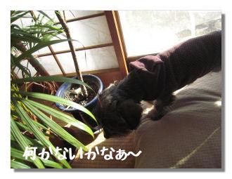 huyuyasumi4.jpg