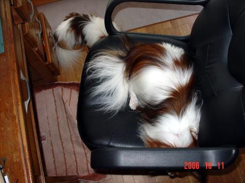 椅子で寝るアスピ3