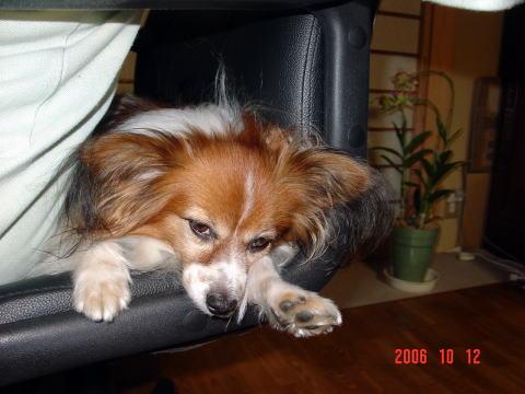 椅子で寝るアスピ2