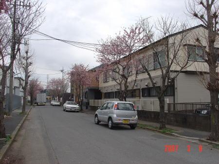 篠篭田の桜3