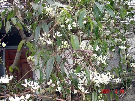 散歩中の花1