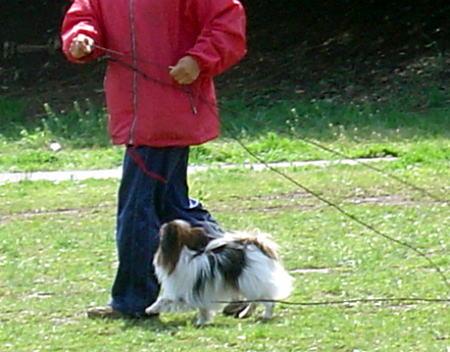 訓練士と遊ぶアラン1