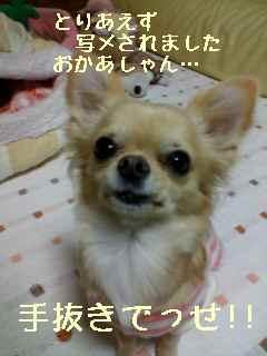 blog2007.11.13.jpg
