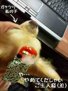 blog2007.11.22-2.jpg