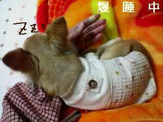 blog2007.11.25-2.jpg