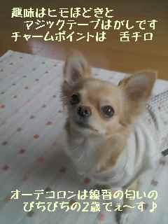blog2007.11.29.jpg