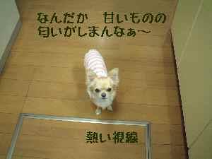 blog2007.12.11-2.jpg