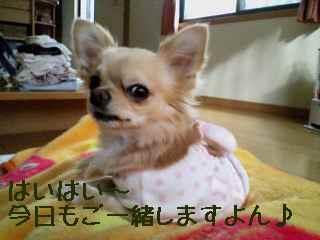 blog2007.12.14.jpg