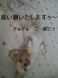 blog2007.12.7-2.jpg
