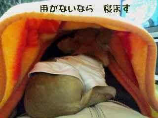 blog200712191.jpg