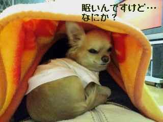 blog200712192.jpg