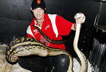 python-chihuahua.jpg