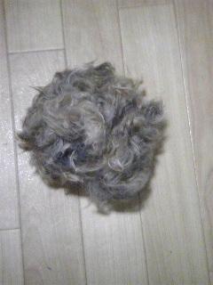 毛刈りの後