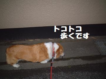 20071201181149.jpg