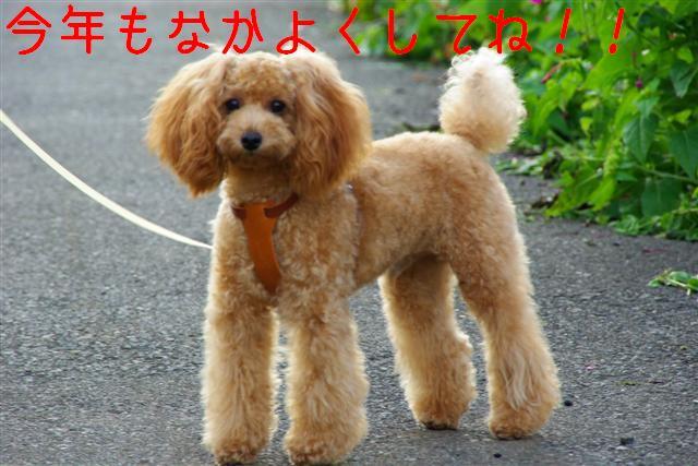 2007.20.29朝散歩 022 (Small) (2)
