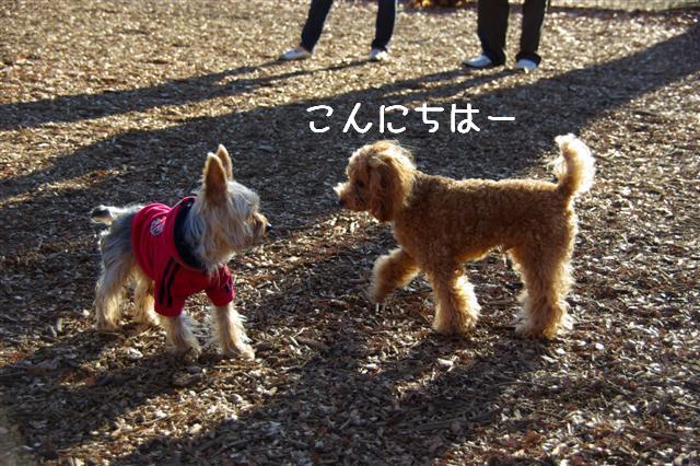 2008・1.2ドッグラン 028 (Small)