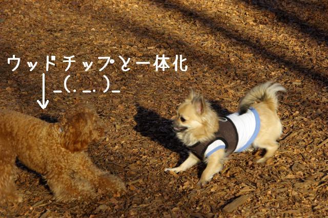2008・1.2ドッグラン 043 (Small)