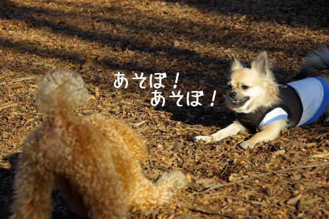 2008・1.2ドッグラン 059 (Small)