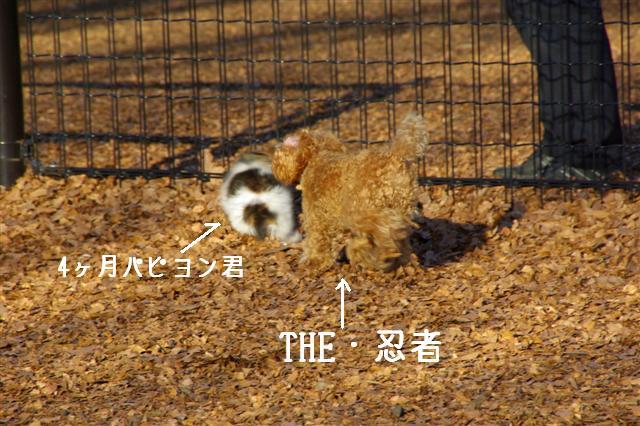2008・1.2ドッグラン 103 (Small)