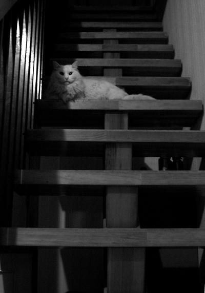 モノクロで猫-1
