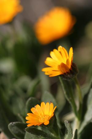 春の花に蜜蜂-2