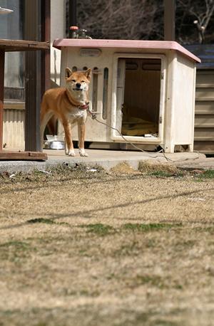 散歩に連れて行けとせがむ犬