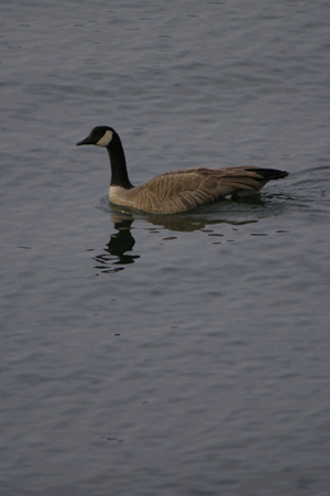 河口湖での撮影-4