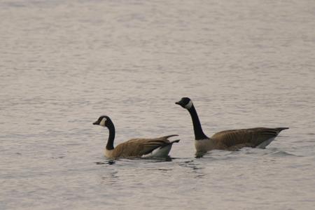 河口湖での撮影-5