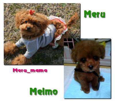meru_melmo01.jpg