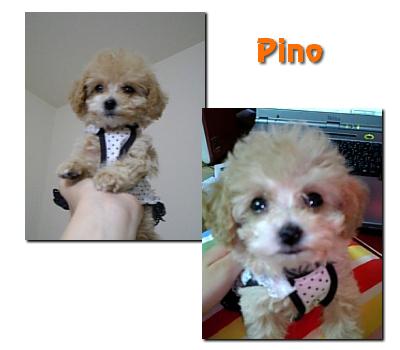 pino01.jpg