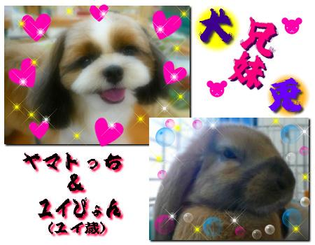 yama_yuy.jpg