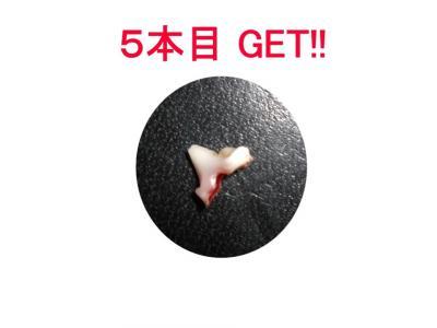 5本目 GET!!
