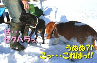 2008_01_NY_shima7.jpg