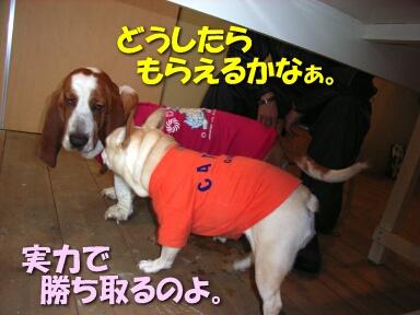 2008_01_mochi5.jpg