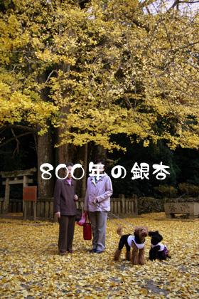 瑞応寺銀杏