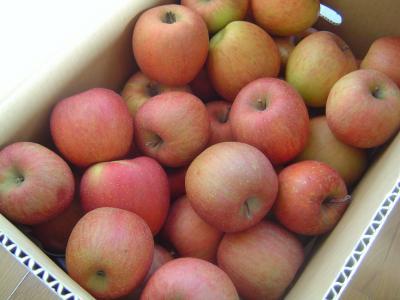 須高のりんご