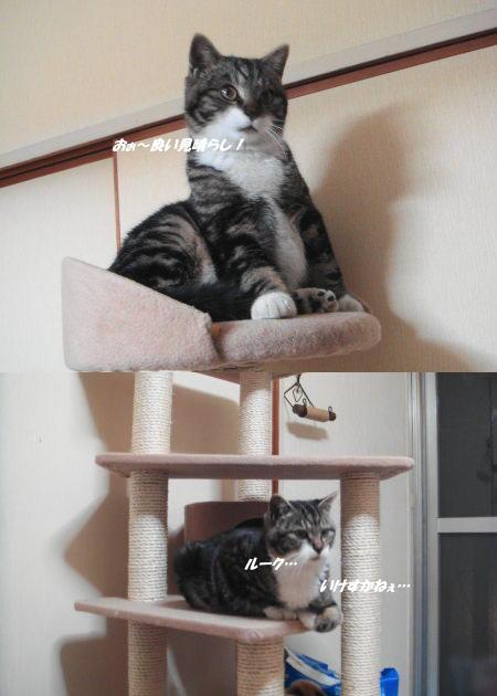 まるで!我が家の猫のよう~